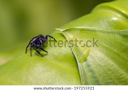 The jumping spider family (Salticidae) contains more than 500 described genera and about 5,000 described species