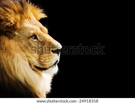 The king of all animals portrait with copy space - stock photo