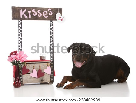 The kissing booth.  Adorable rottweiler lying next to a kissing booth.  Isolated on white. - stock photo