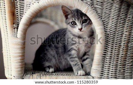 the kitten - stock photo
