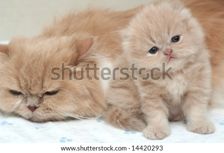 The kitten and cat together lay on a sofa