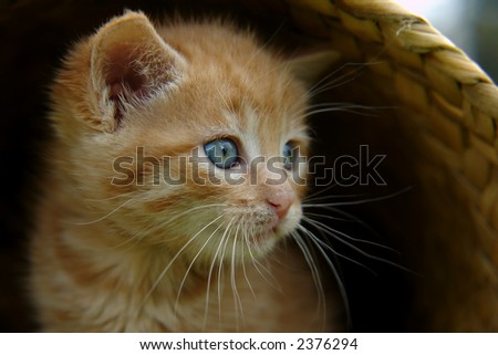 the kitten in the basket - stock photo