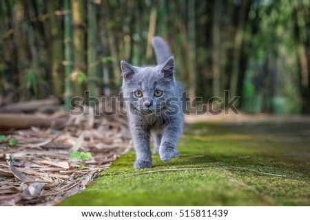 The kitten in the outdoor park