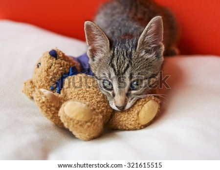 The kitten is biting the leg his toy bear - stock photo