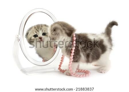The kitten looks in a mirror - stock photo