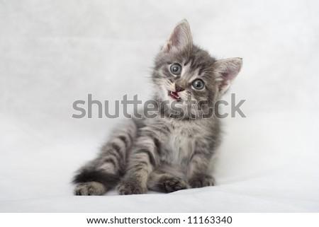 The kitten mews - stock photo