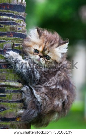 the kitten play at the outdoor. - stock photo