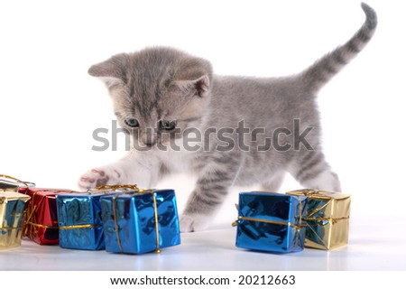 The kitten plays with gifts - stock photo