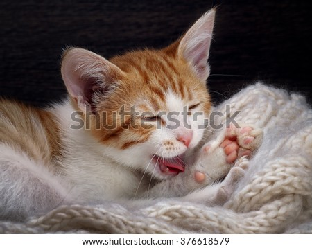 The kitten washes. Portrait woken kitty. Kitten washes his paw, seen to fall, the language. Paw pink. Cat fluffy, white with red. Kitten funny. Background wooden board. The cat lies on a knitted rug