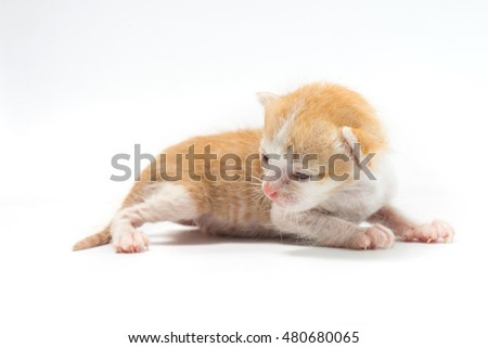 The kitten 2 weeks old feel drowsy and want to sleep on white background