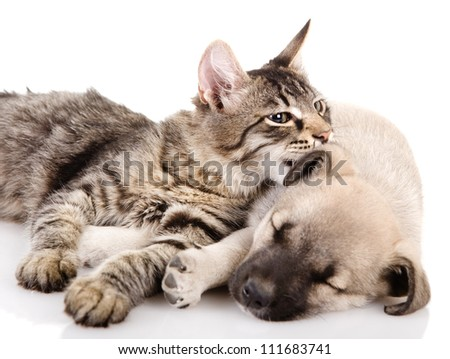 the kitten whispers to a dog. isolated on white background - stock photo