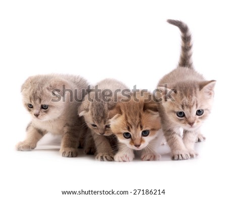 The kittens plays on a white background - stock photo