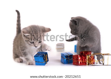 The kittens plays with gifts - stock photo
