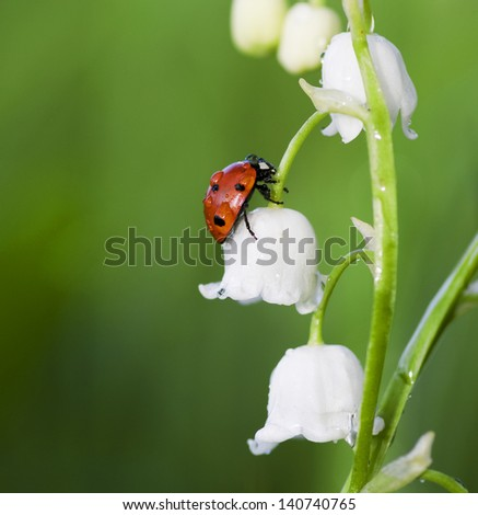 The ladybird creeps on a flower of a lily of the valley - stock photo