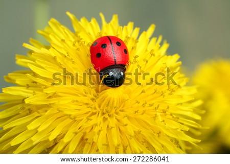 The ladybug on a yellow dandelion - stock photo