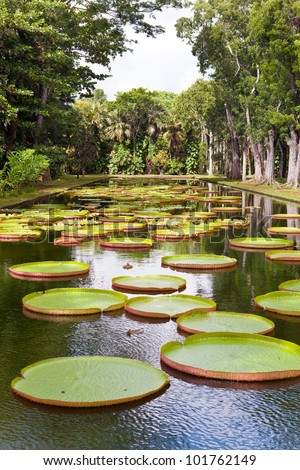 The lake in park with Victoria amazonica, Victoria regia. - stock photo
