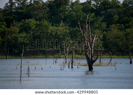 The lake of the dead trees - stock photo