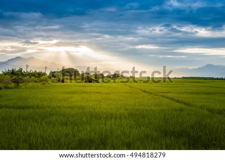 The landscape photo, Thailand mountain, beautiful rice field