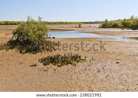 The landscape with mangrove trees and sand surrounding at low tide. Madagascar - stock photo