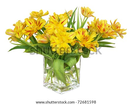 The large bouquet of the dismissed yellow tulips in a glass vase, isolated on a white background - stock photo