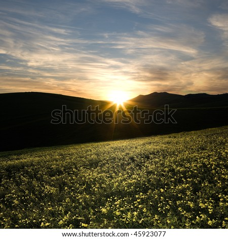 the last rays of sun are illuminating a meadow flowery of yellow clover - stock photo
