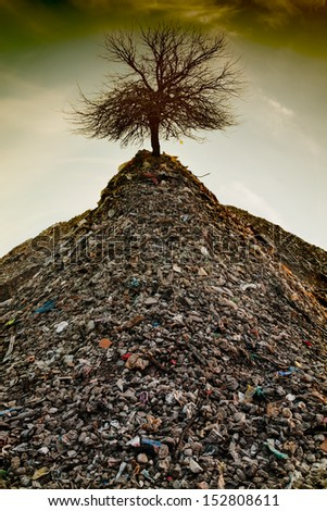 The last tree - stock photo