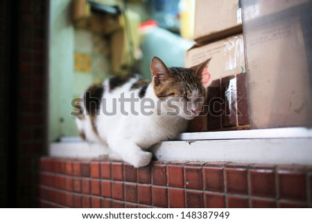 the lazy short hair Calico white cat, sweety close eye, lying on the window in asian store or shop in china hong kong - stock photo
