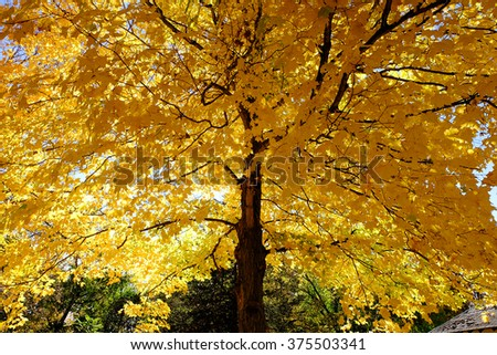 the leaf is change the color to yellow when the autumn coming