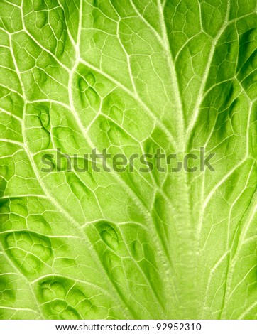 The leaf of salad close up. - stock photo