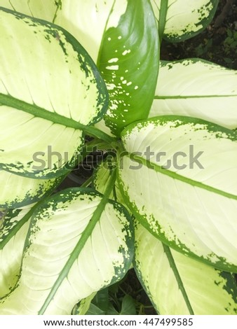 The leaf of tree in pot. - stock photo