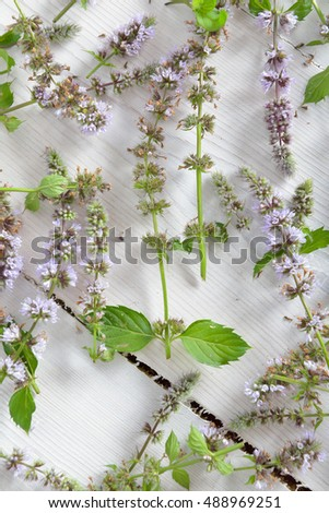 the leaves and flowers of mint on wooden white background