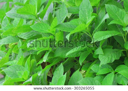 The leaves are part of nature - stock photo