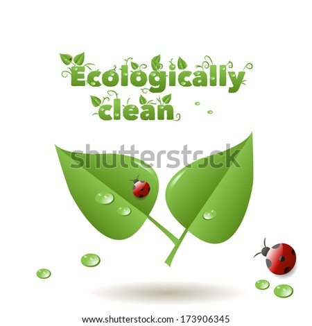 The leaves drops, and the ladybug inscription Ecological clean for your design, decoration, customers, advertising, business cards