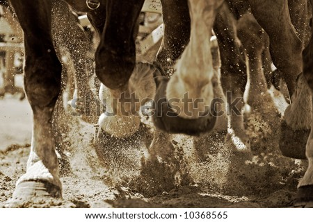The legs of a team of powerful draft horses pulling their load with energy – can represent teamwork, progress, power, etc. (sepia tint, focus point on exploding sand just behind foreground hooves).
