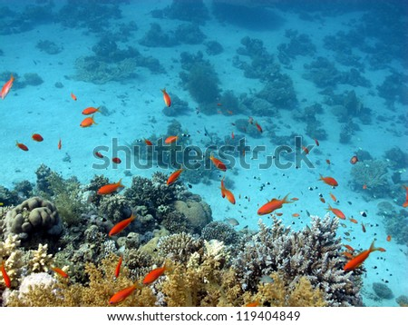The life under the sea, beautiful coral reef with a lot of fishes - Red sea, Egypt