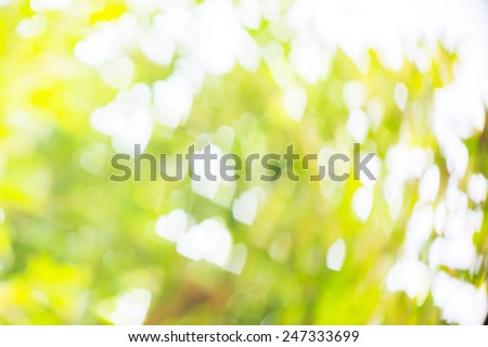 the light green and yellow heart bokeh abstract background