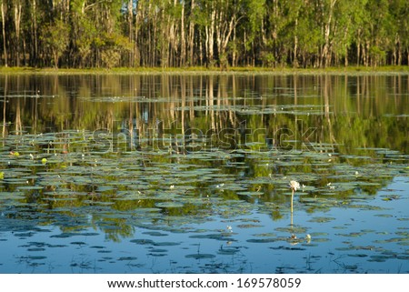The lily-covered Sandy Billabong, Kakadu, Australia - stock photo