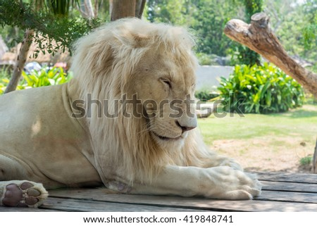 The Lions closed fractures - stock photo