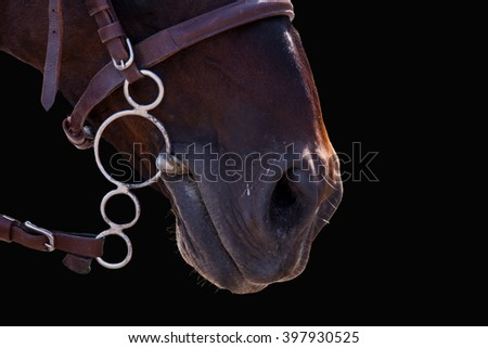 The lips of the Horse in bridle close. The sight of a horse. Horse isolated on black. Thoroughbred horse chestnut suit. - stock photo