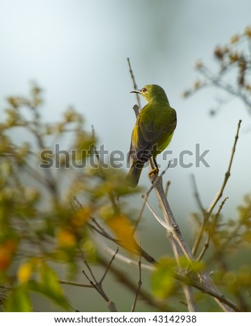 The little bee-eater at the branch of tree - stock photo