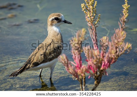 The little bird live in the nature. - stock photo