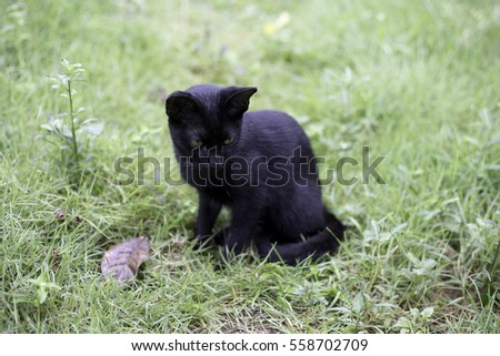 the little black cat sit on green grass