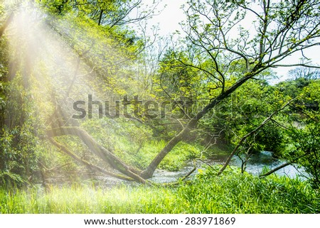 The little creek in the sunbeam - stock photo