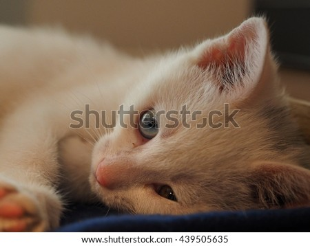 The little cute white cat with all kinds of postures