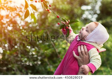 The little girl in the hands of an adult daughter in the hands of a parent, runs to the tree trying to get a cherry, a summer on a warm Sunny day outdoors in the Park - stock photo