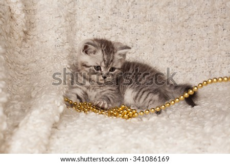 the little gray kitten plays a New Year's beads on a light background