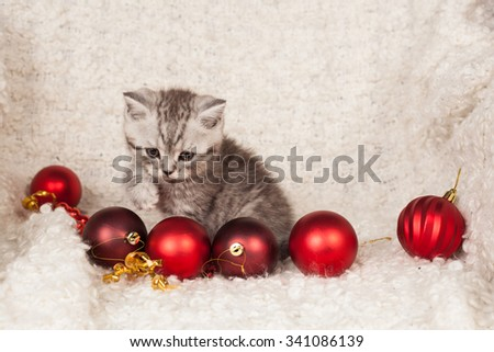 the little gray kitten plays New Year's spheres