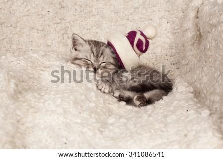 the little gray kitten sleeps in a Christmas hat  - stock photo