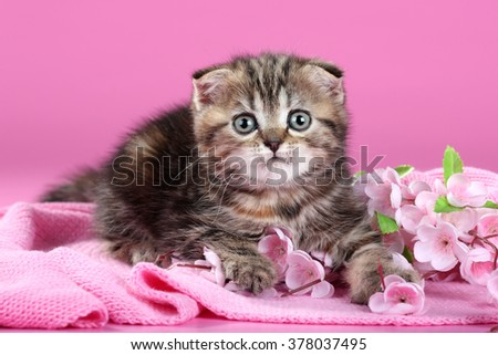 The little kitten with flowers on pink background