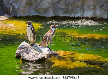 The little penguinA pair of little penguins on a rock jutting out of the water - stock photo